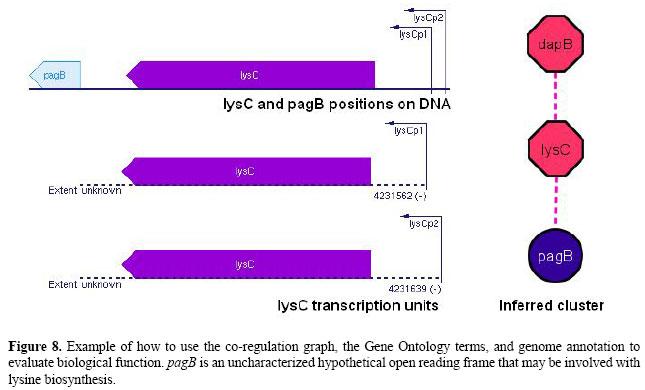Genome-wide partial correlation analysis of Escherichia coli